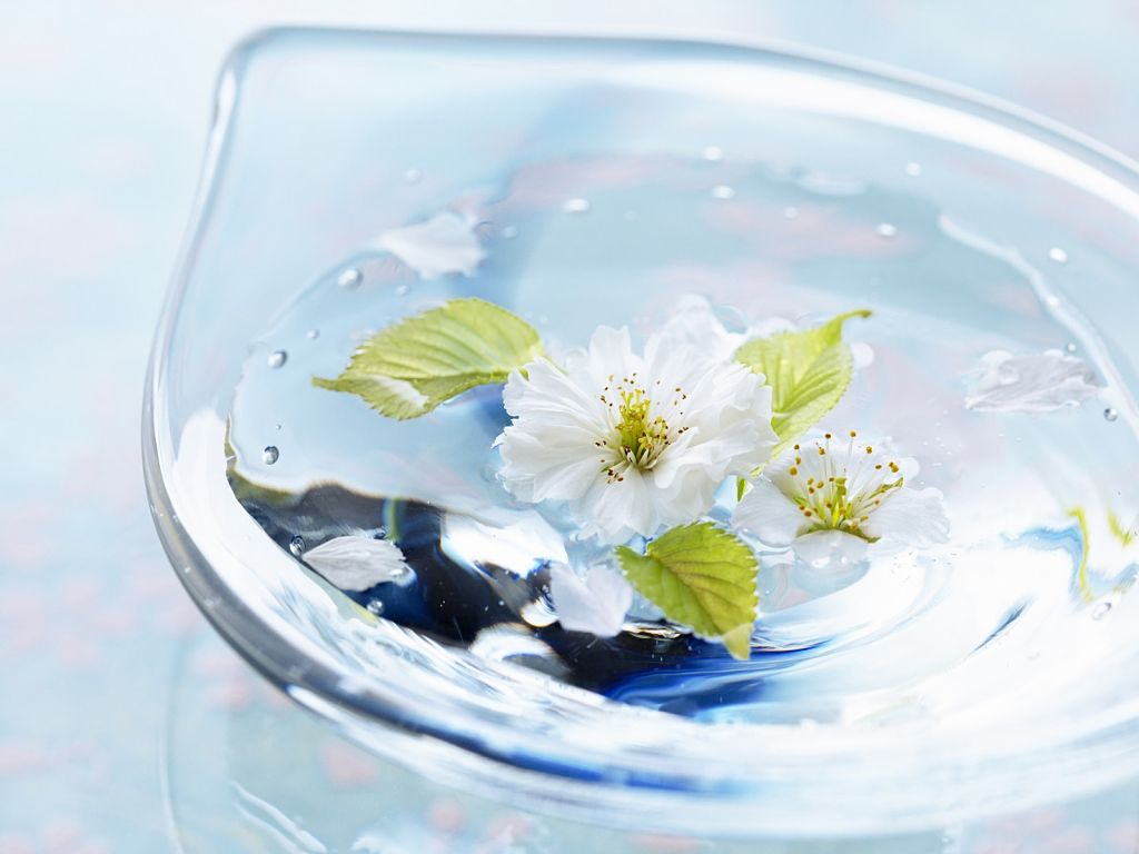 Картинки вода и цветы
