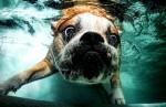 Собака с открытыми глазами под водой