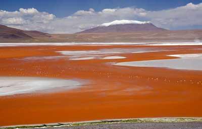 Боливийское озеро Лагуна Колорада