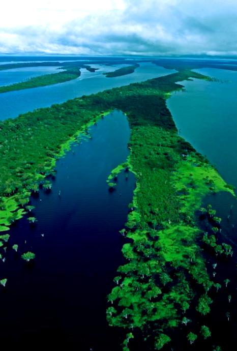 Флора и фауна реки негро