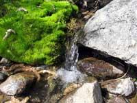 Родниковая и ключевая вода