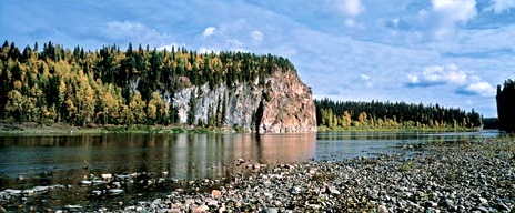 Хвойный лес на берегу реки в Светлой воде
