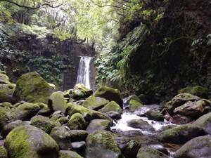 Водопад в лесу на острове Сан Мигель, Азорские острова.